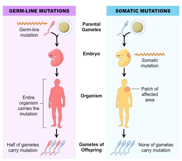 somatic-vs-germline_med