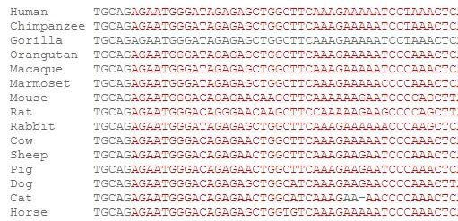 Comparative Genomics_2