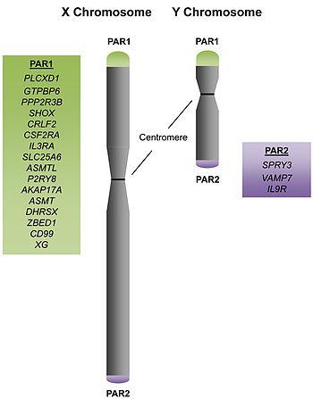 Pseudoautosomal_Regions_and_Genes
