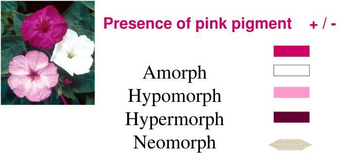 amorph-hypomorph-hypermorph-neomorph-n