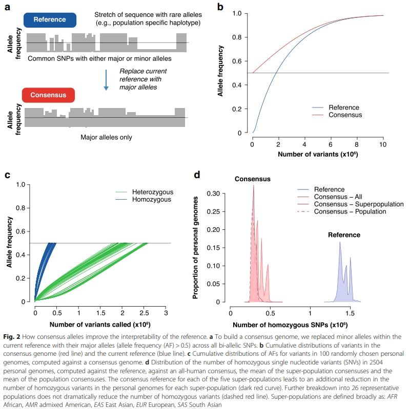 consensus genome